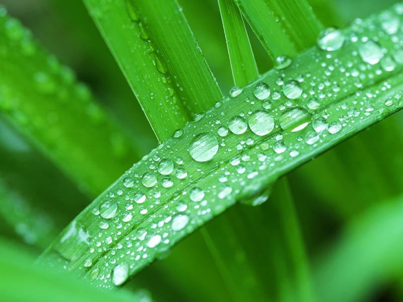 画框图片素材_绿色植物叶子上的晶莹露珠,清晰的绿色植物背景素材